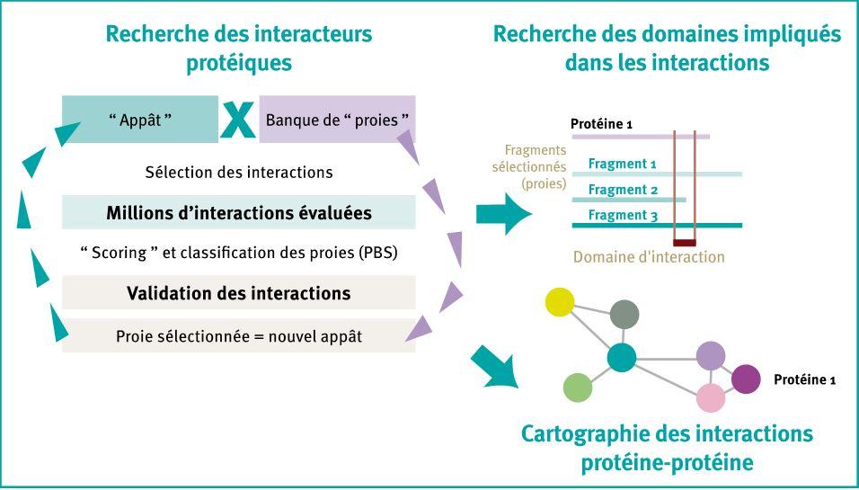 interPP