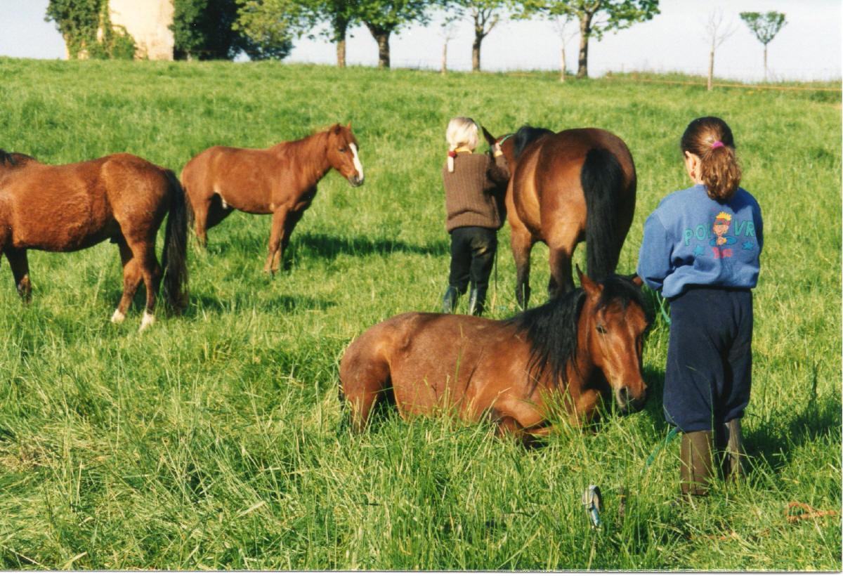 poneys enfants